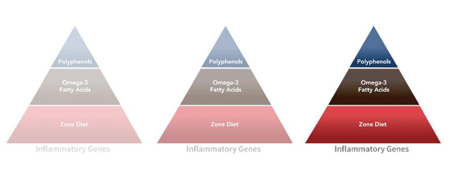 zone-inflammatory_pyramid1